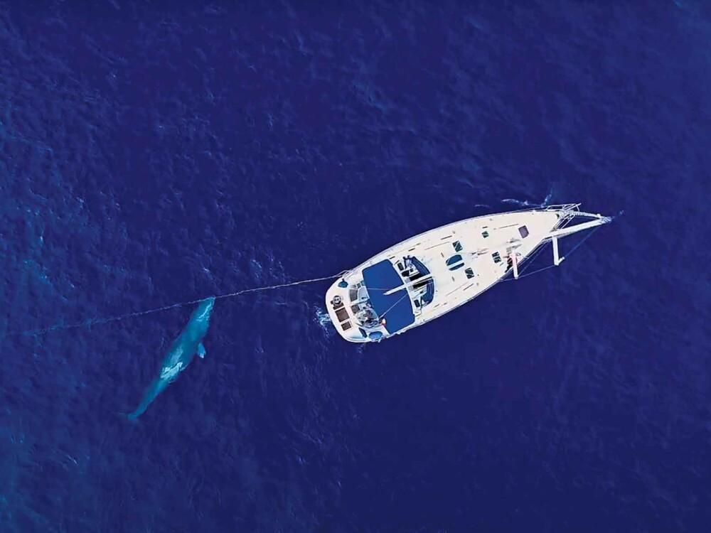 Wale IrifiCachalote Oktober